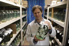 Пиявки с биофабрики - польза